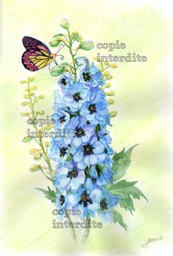 Delphinium et papillon