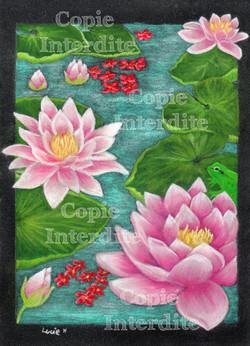 Les fleurs de lotus