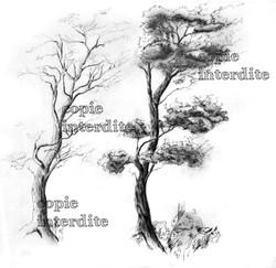 arbre croquis