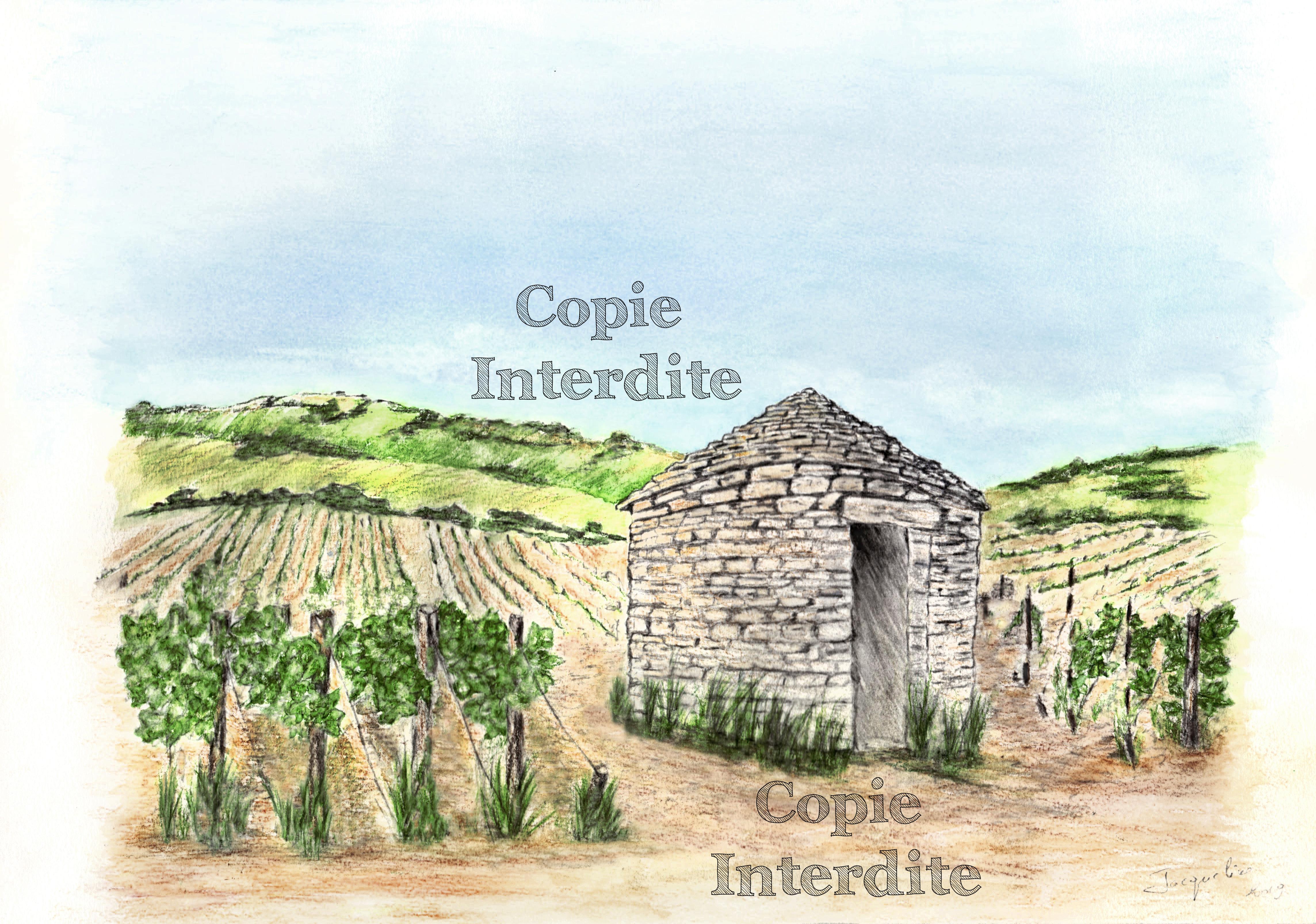 cabotte n°2 dans les vignes