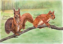 écureuils monsieur madame