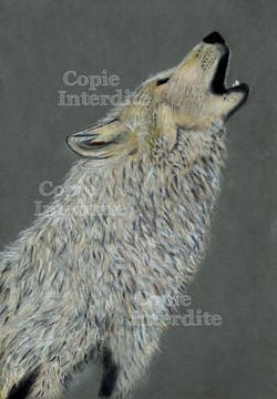 L'appel du loup