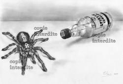 Vodka et Mygale