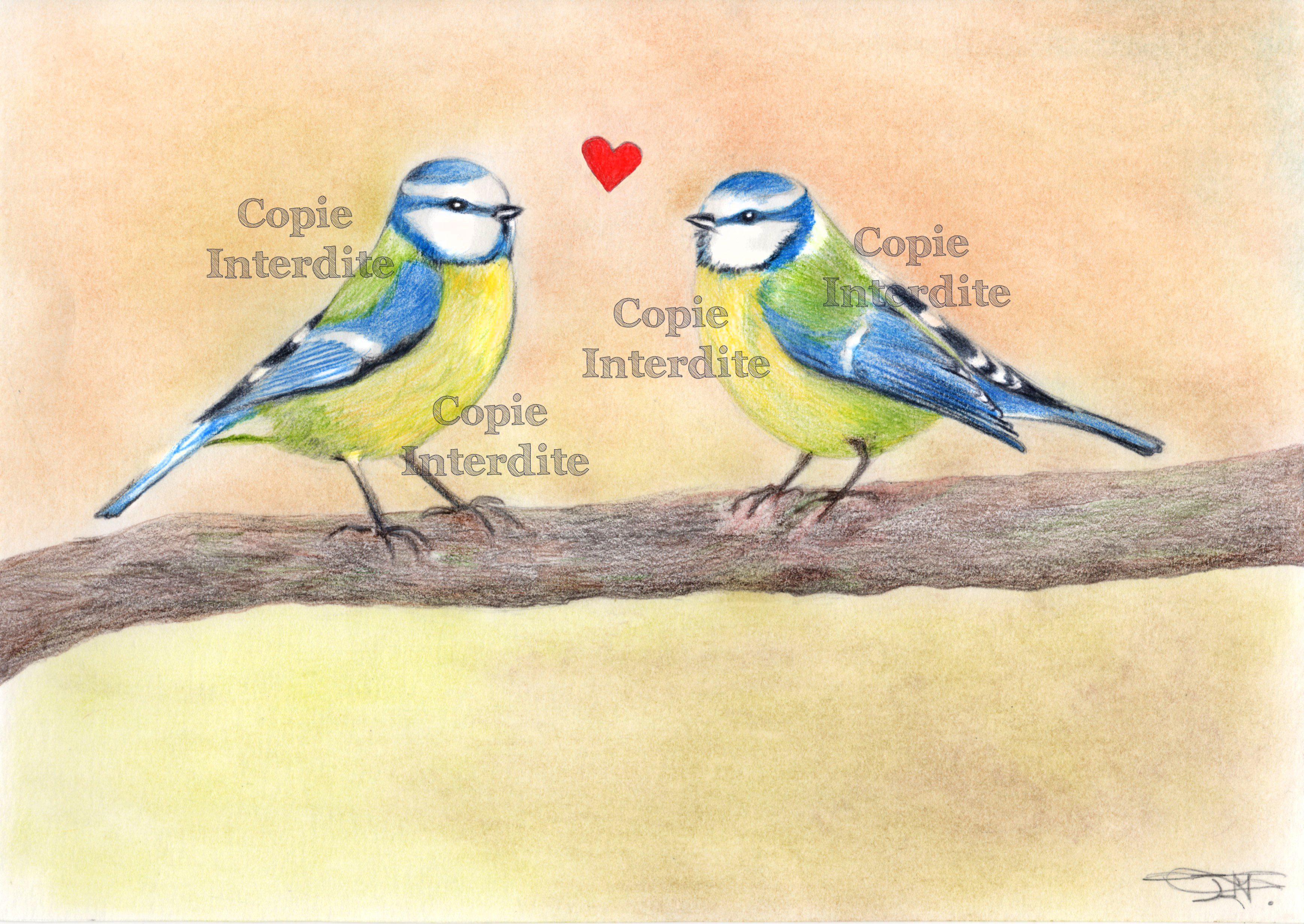 couple de mésange