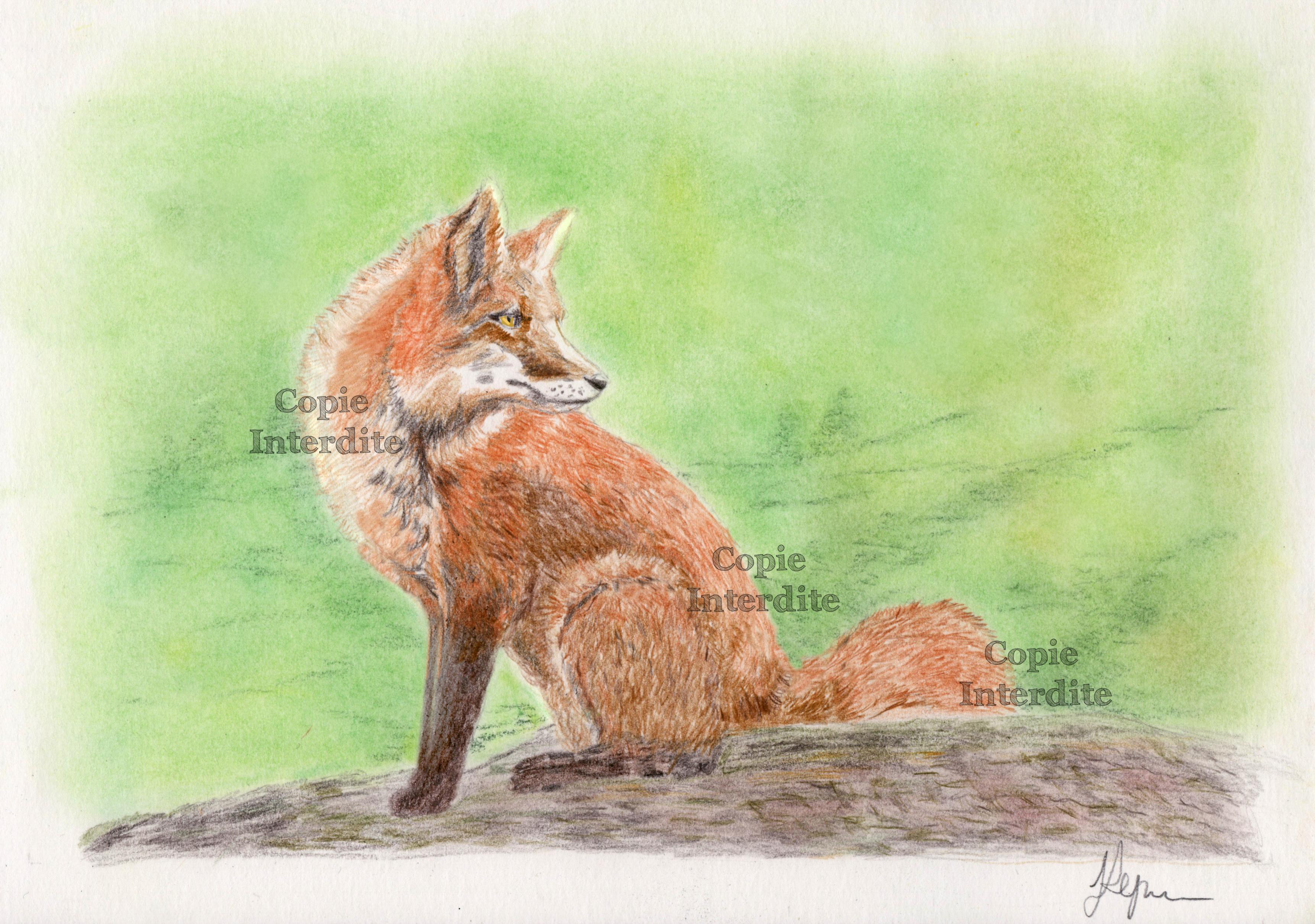 jeune renard