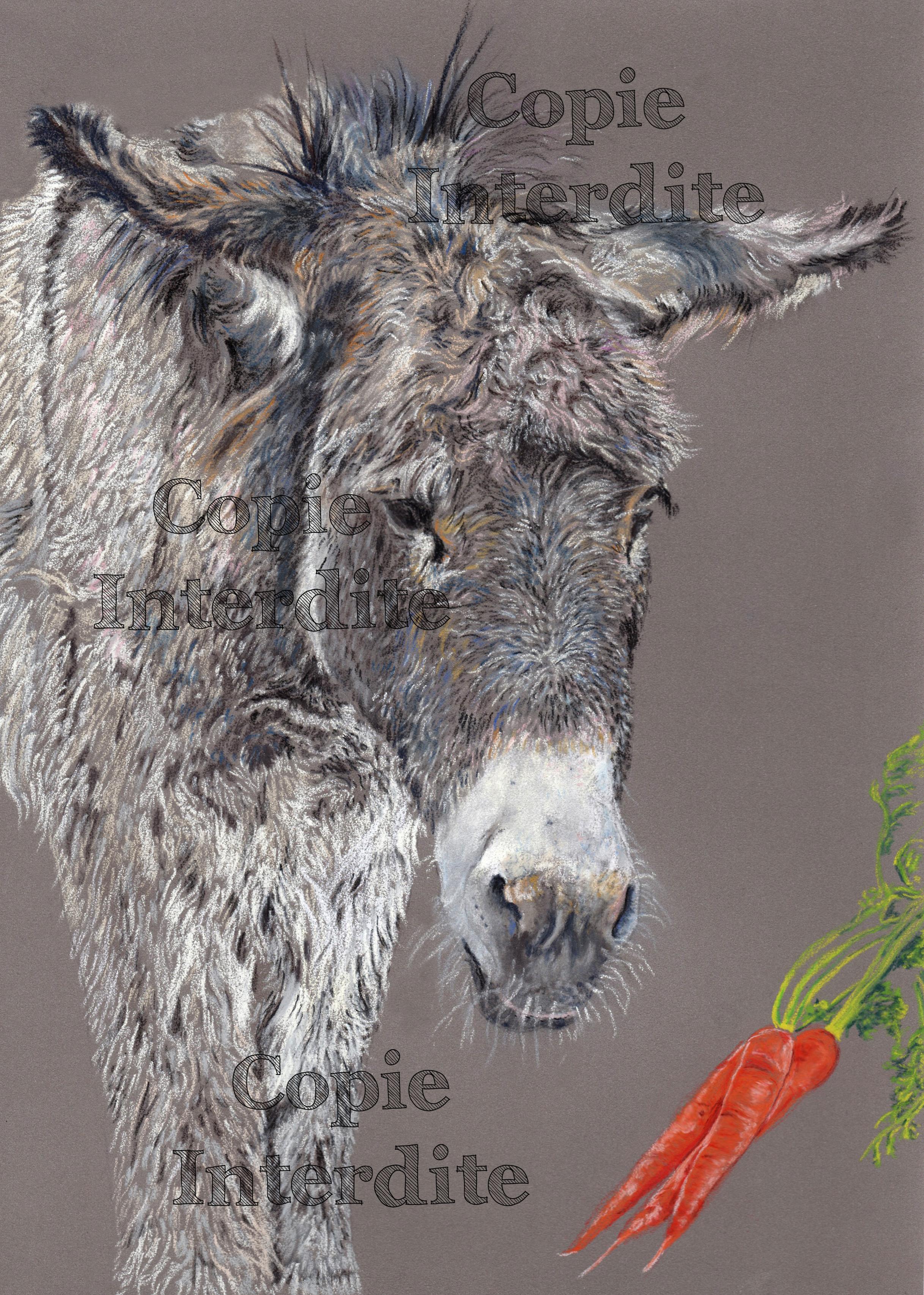 Petit âne triste