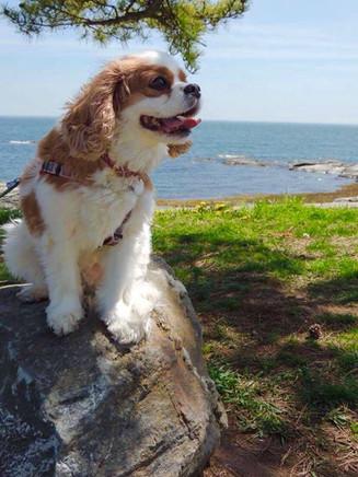 Cammie, Dog Days of Summer