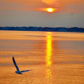 Bird Soaring into Golden Beach Sunset