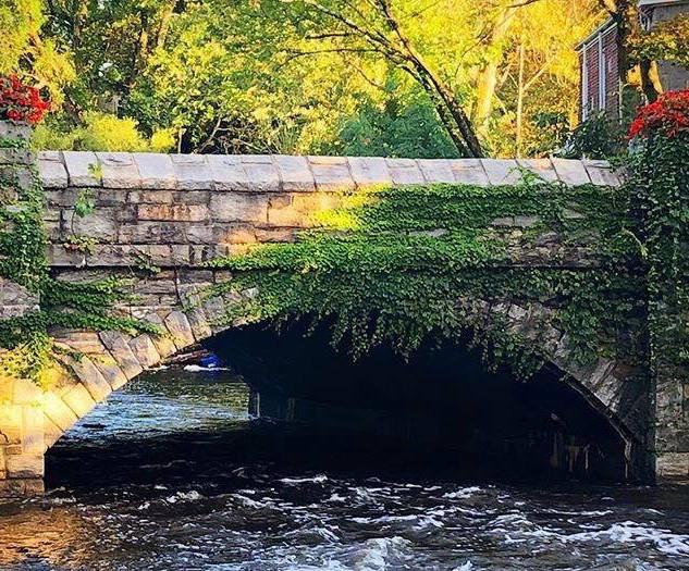 Golden Hour Ivy Covered Bridge