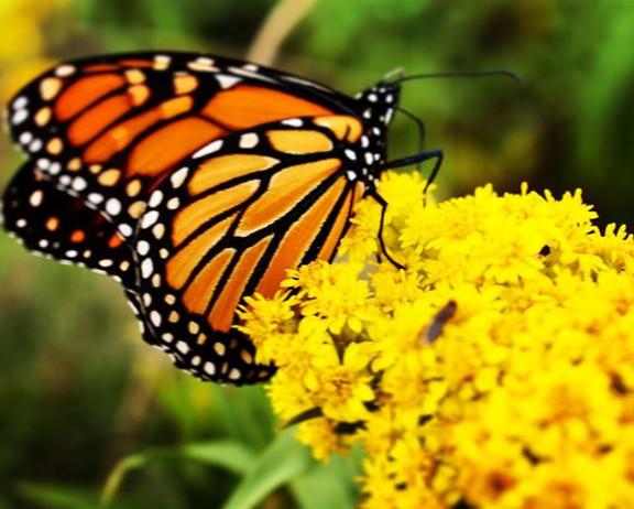 Vibrant Butterfly