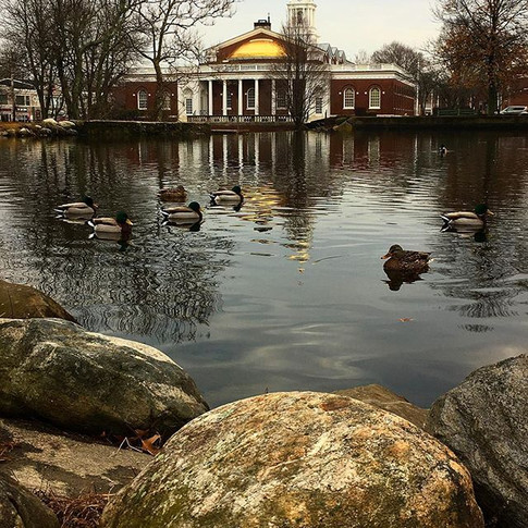 Town Hall Ducks
