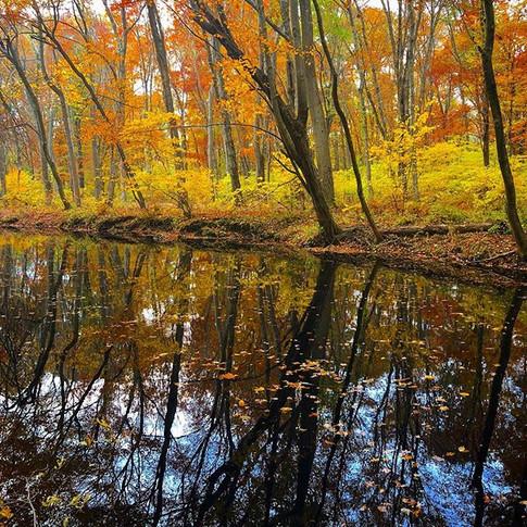 Autumn Woods at Eisienhower Park