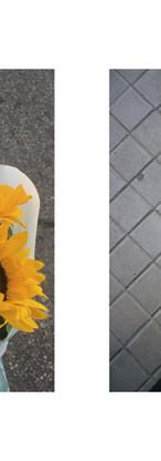 pareja_4_girasoles-suelo.jpg