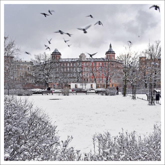 Plac św. Macieja/WRO