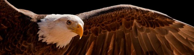 soaring-eagle-15035804.jpg