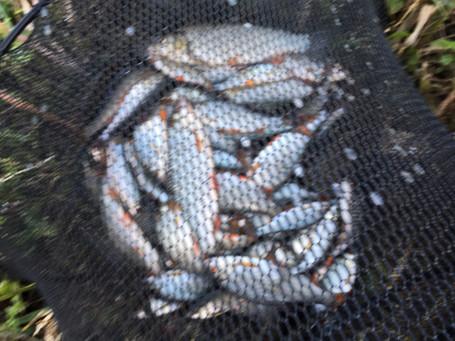 Eddie Gillard 15 pounds of Roach_edited.