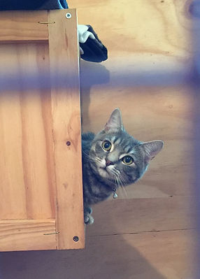 Country Paws Boarding kennels Christchurch cattery03