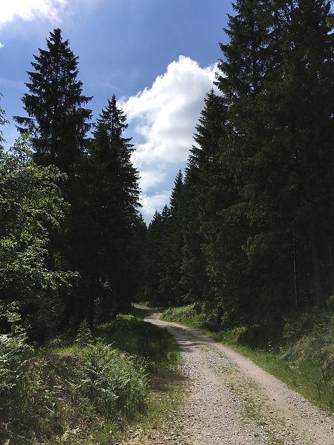 Schwarzwald 3.JPG
