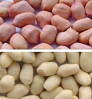 Lorenzati arachidi.png