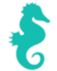 seahorse copy.png