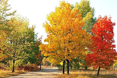 Savelands Tree Donation