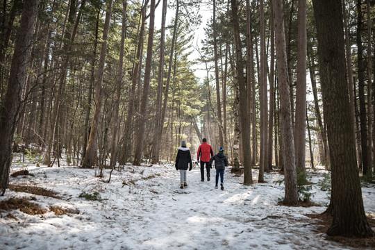 Hiking Minnesota Point Pine Forest SNA