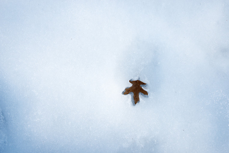 Leaf Revealed by Thawing Northwoods Lake