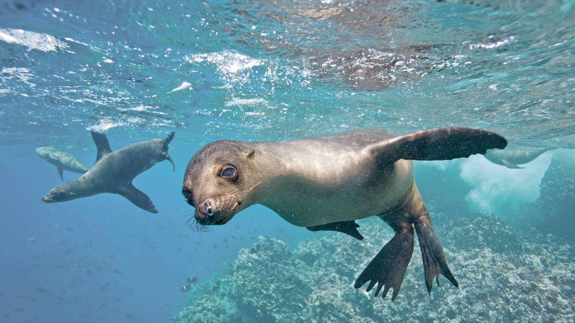 Latitude seal