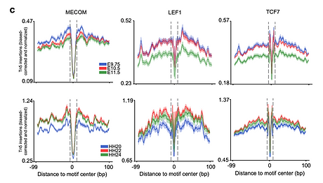 Shown are the dynamic patterns of the MECOM, LEF1, and TCF7 footprints in mouse and chicke
