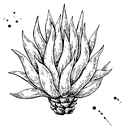 blue agave png.png