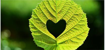 Loving-Kindness Meditation Script