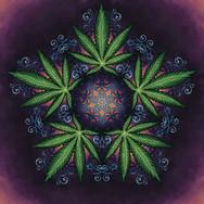 Indica Mandala