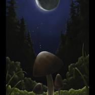 Moonlit Mushroom