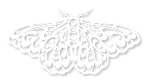 beautiful-bastion-logo-moth-shadow.png