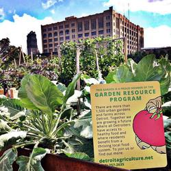 Community Gardens in Detroit