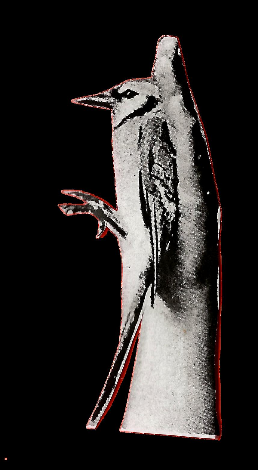 ידיים מחזיקוץ ציפורים1.png