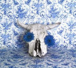 Delft Skull