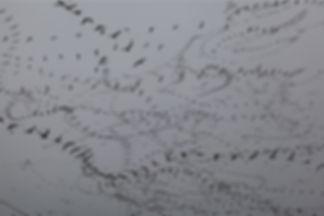 ציפורים6.jpg
