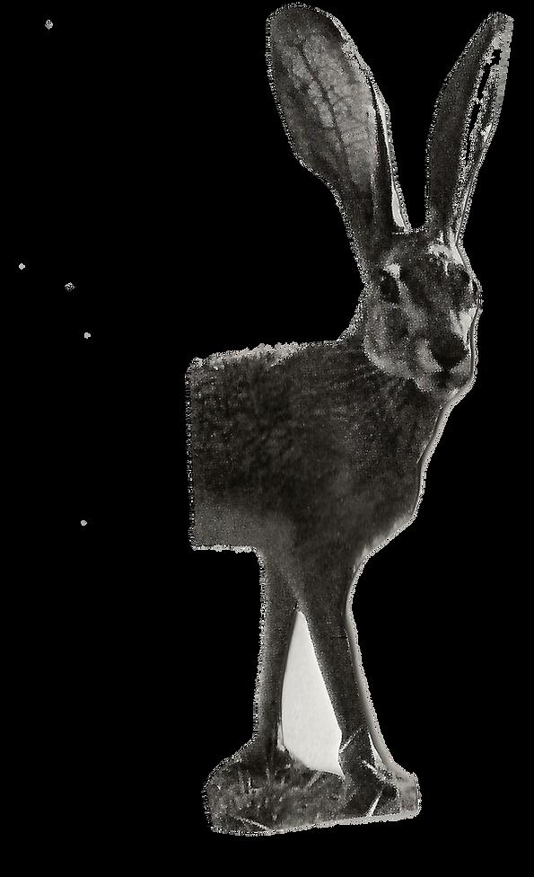 ארנבמטריד.png