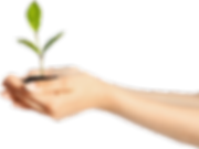 Plant in hand.png