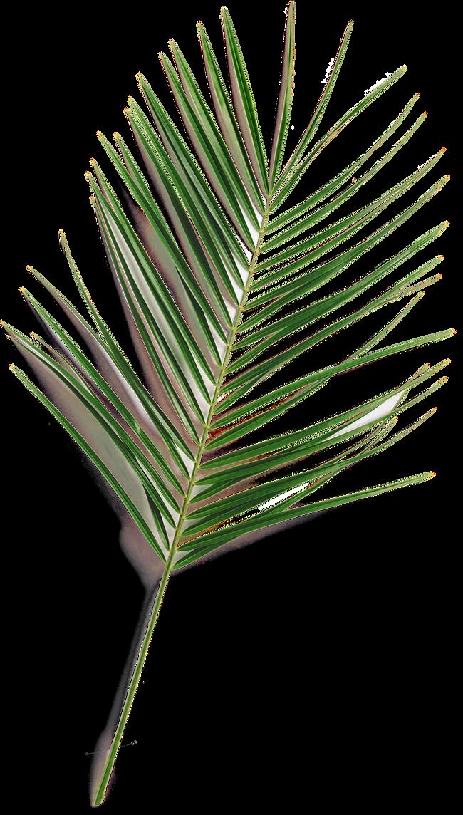 Updated Leaffff fern.png