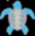 NUMIS-JUST-TURTLE.png