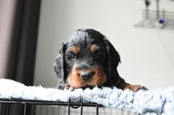 Pups 13