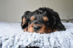 Pups 15
