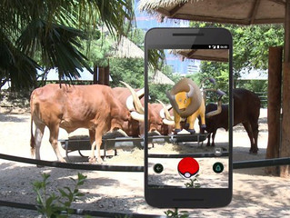 Pokemon Go was an innovative idea and lost opportunity for zoos