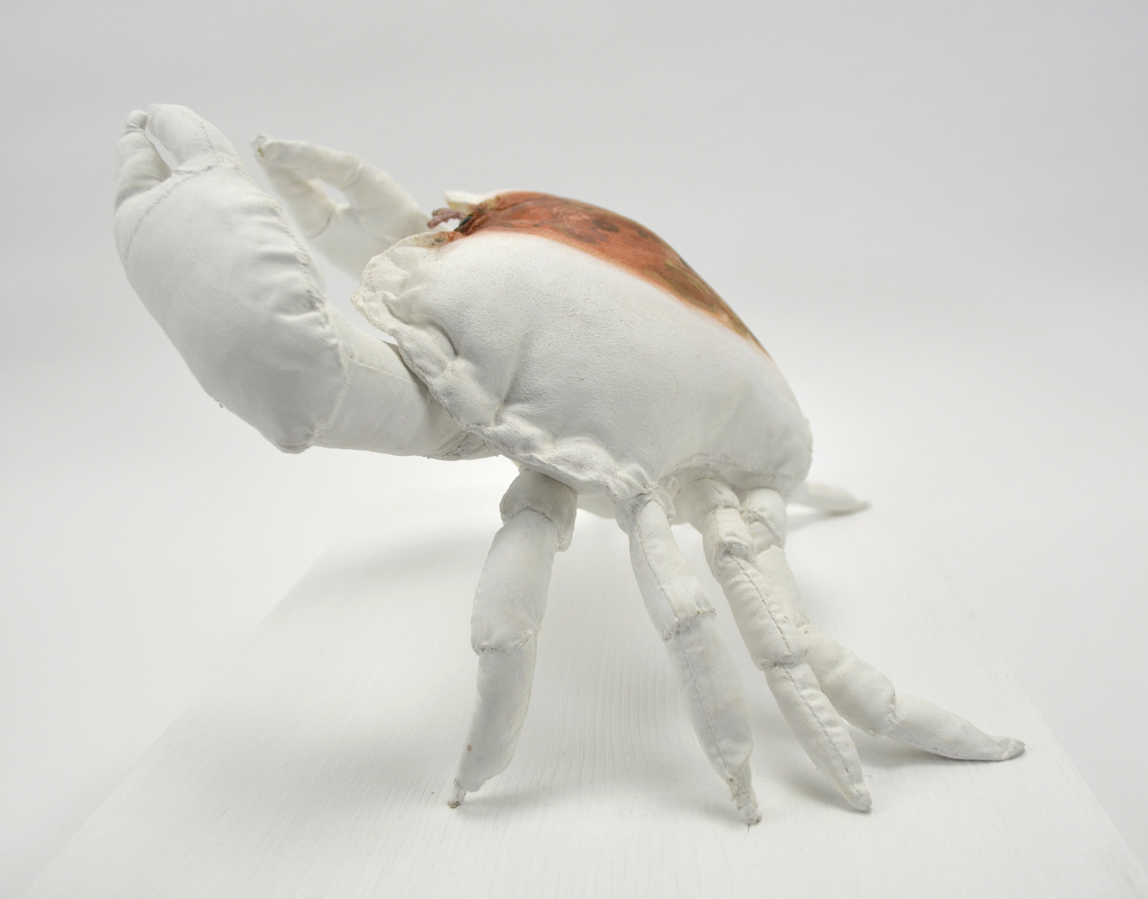 The Defender (Edible Crab) side view