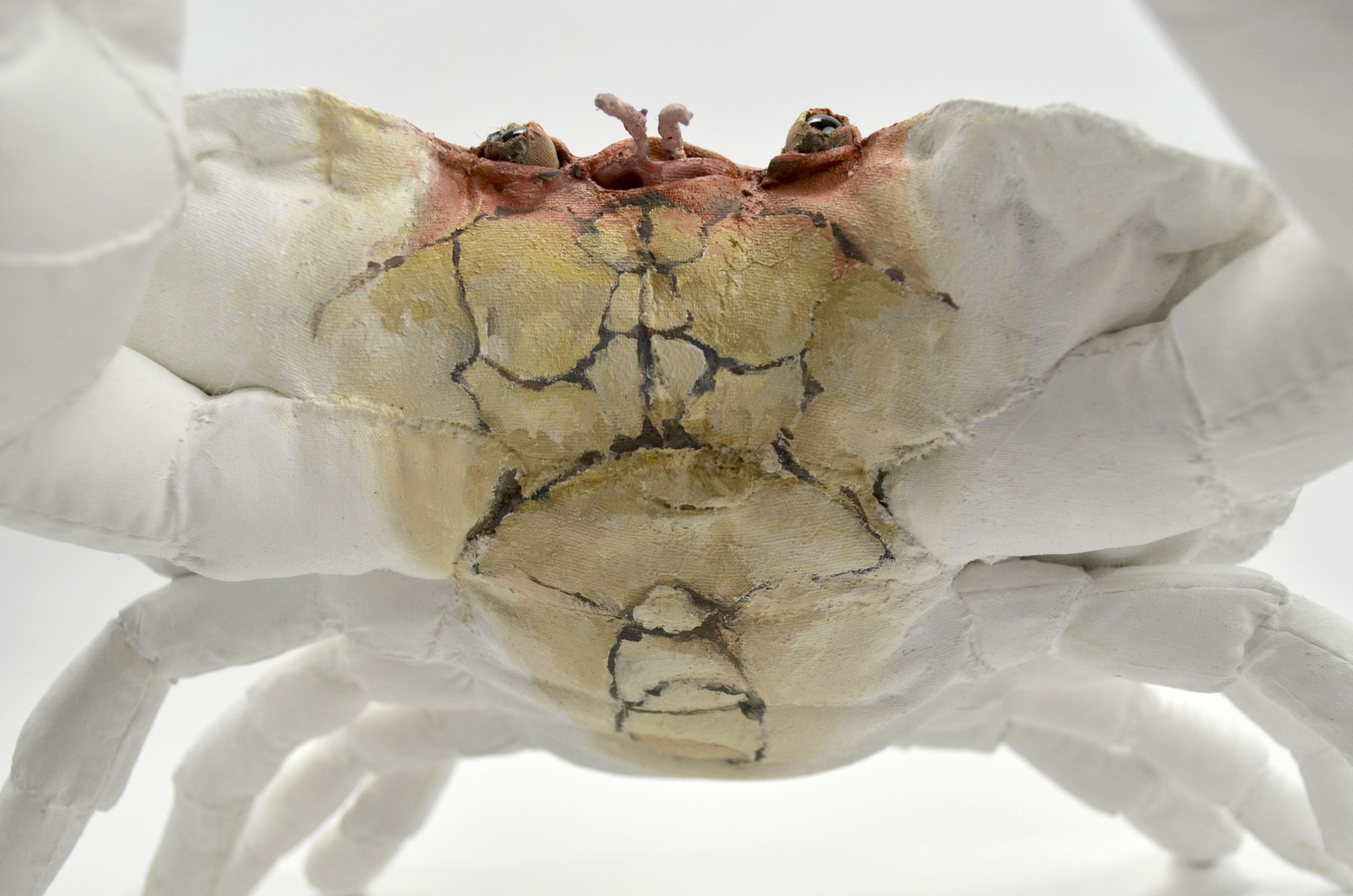 The Defender (Edible Crab) detail