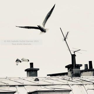 © IGG 2021 Toits de Paris