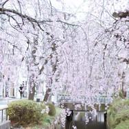 10:00|桜咲くクリエイティブ界隈