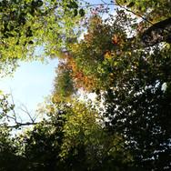 14:00|木漏れ日の下で|軽井沢